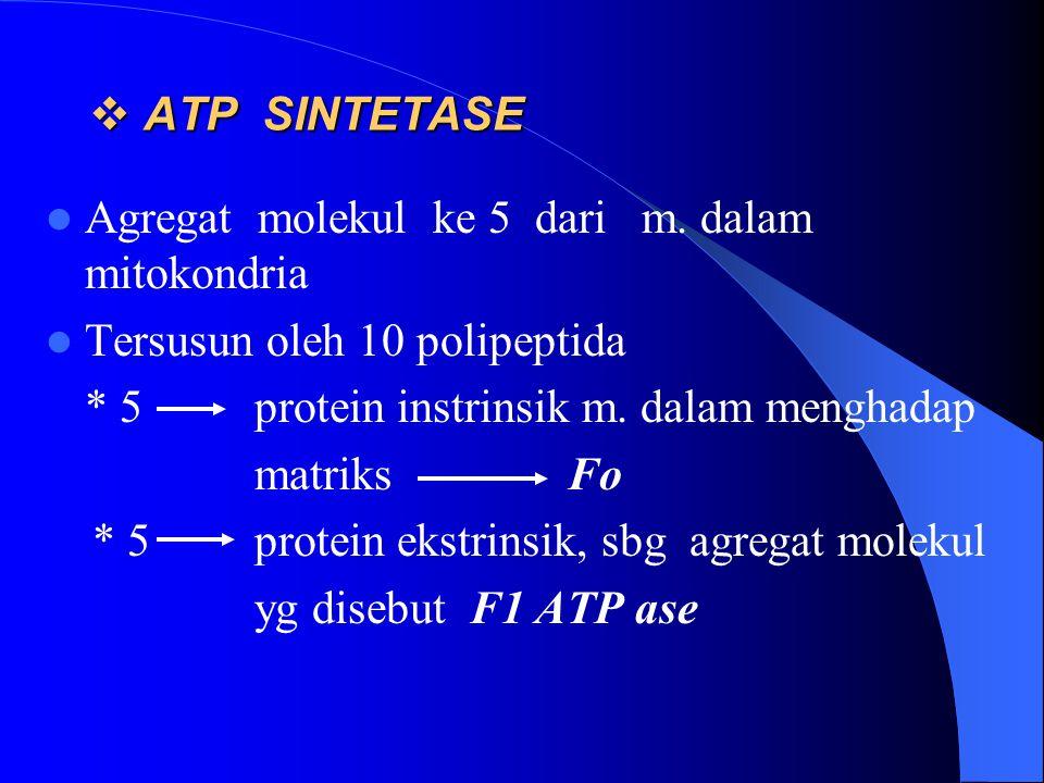  ATP SINTETASE Agregat molekul ke 5 dari m. dalam mitokondria Tersusun oleh 10 polipeptida * 5protein instrinsik m. dalam menghadap matriks Fo * 5pro