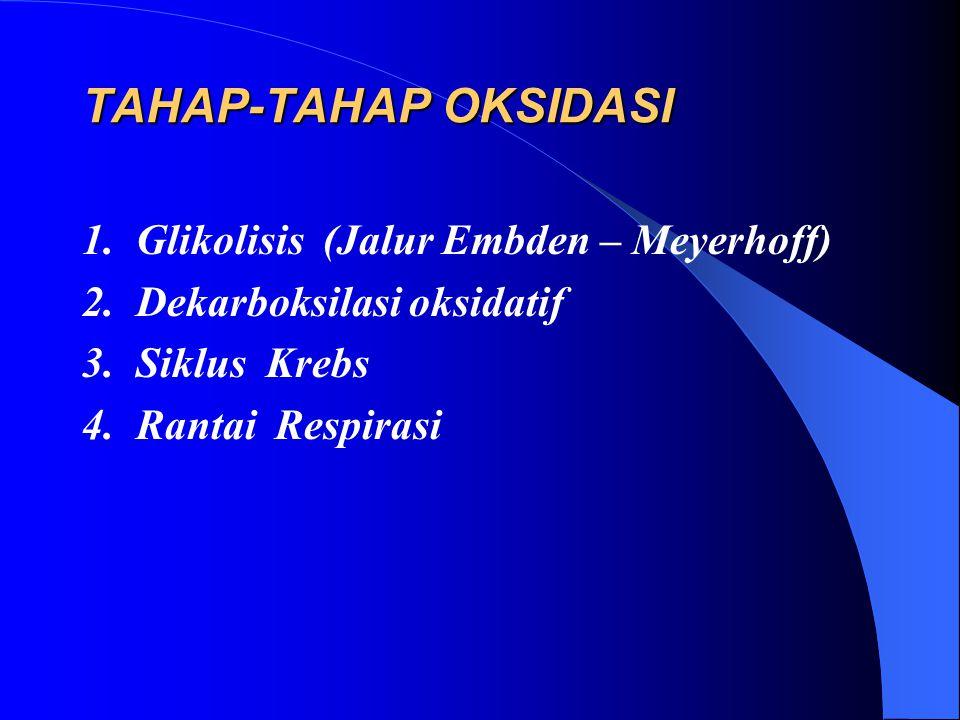TAHAP-TAHAP OKSIDASI 1. Glikolisis (Jalur Embden – Meyerhoff) 2. Dekarboksilasi oksidatif 3. Siklus Krebs 4. Rantai Respirasi