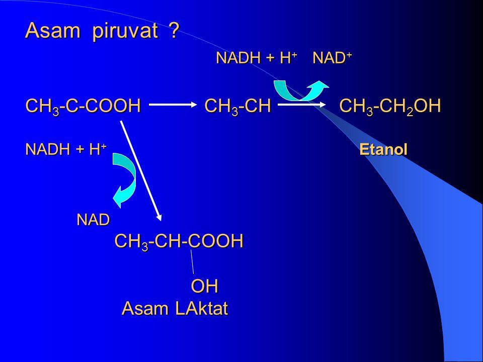 Asam piruvat ? NADH + H + NAD + CH 3 -C-COOH CH 3 -CH CH 3 -CH 2 OH NADH + H + Etanol NAD CH 3 -CH-COOH OH Asam LAktat