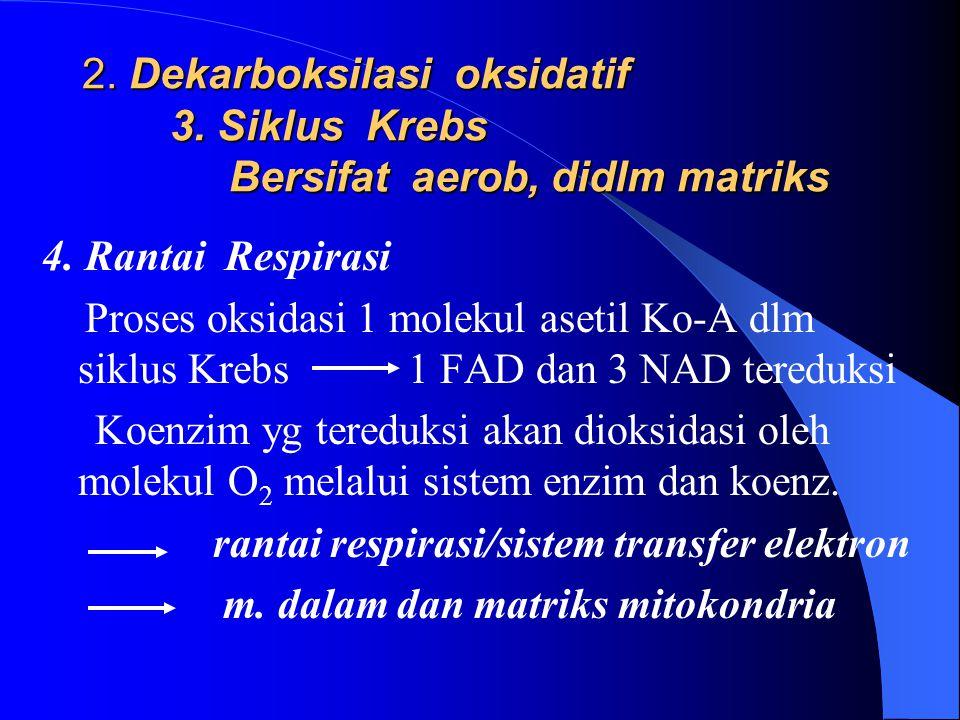 2. Dekarboksilasi oksidatif 3. Siklus Krebs Bersifat aerob, didlm matriks 4. Rantai Respirasi Proses oksidasi 1 molekul asetil Ko-A dlm siklus Krebs 1