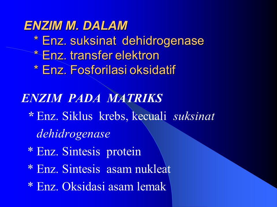 ENZIM M. DALAM * Enz. suksinat dehidrogenase * Enz. transfer elektron * Enz. Fosforilasi oksidatif ENZIM PADA MATRIKS * Enz. Siklus krebs, kecuali suk