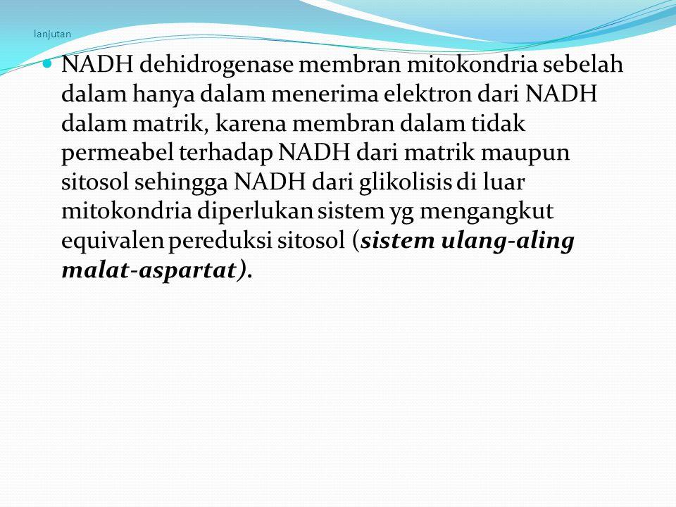 lanjutan NADH dehidrogenase membran mitokondria sebelah dalam hanya dalam menerima elektron dari NADH dalam matrik, karena membran dalam tidak permeab