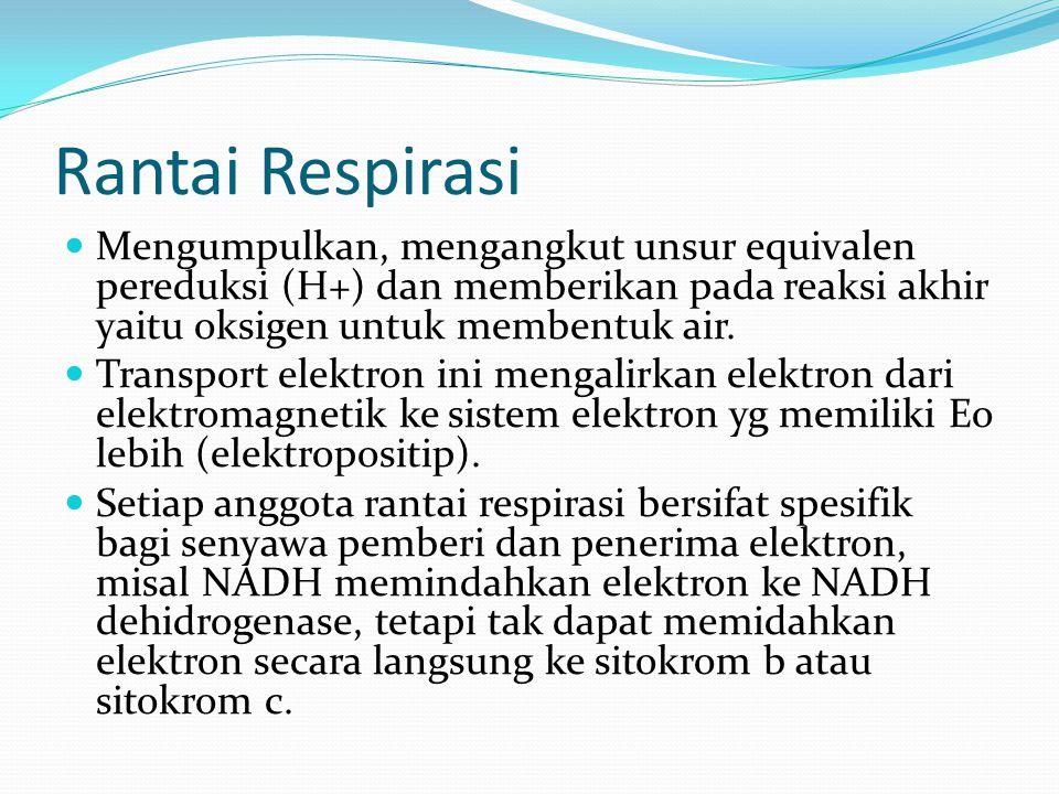 Rantai Respirasi Mengumpulkan, mengangkut unsur equivalen pereduksi (H+) dan memberikan pada reaksi akhir yaitu oksigen untuk membentuk air. Transport