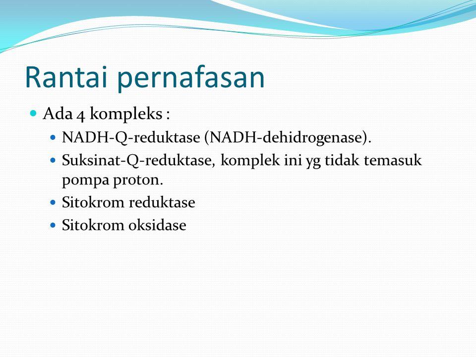 Rantai pernafasan Ada 4 kompleks : NADH-Q-reduktase (NADH-dehidrogenase). Suksinat-Q-reduktase, komplek ini yg tidak temasuk pompa proton. Sitokrom re