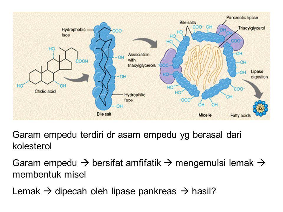 Garam empedu terdiri dr asam empedu yg berasal dari kolesterol Garam empedu  bersifat amfifatik  mengemulsi lemak  membentuk misel Lemak  dipecah oleh lipase pankreas  hasil?
