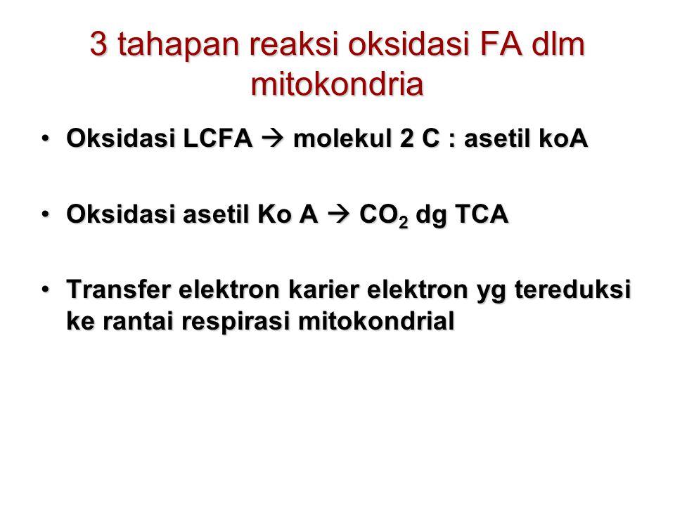 3 tahapan reaksi oksidasi FA dlm mitokondria Oksidasi LCFA  molekul 2 C : asetil koAOksidasi LCFA  molekul 2 C : asetil koA Oksidasi asetil Ko A  CO 2 dg TCAOksidasi asetil Ko A  CO 2 dg TCA Transfer elektron karier elektron yg tereduksi ke rantai respirasi mitokondrialTransfer elektron karier elektron yg tereduksi ke rantai respirasi mitokondrial
