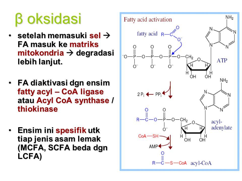 β oksidasi setelah memasuki sel  FA masuk ke matriks mitokondria  degradasi lebih lanjut.setelah memasuki sel  FA masuk ke matriks mitokondria  degradasi lebih lanjut.
