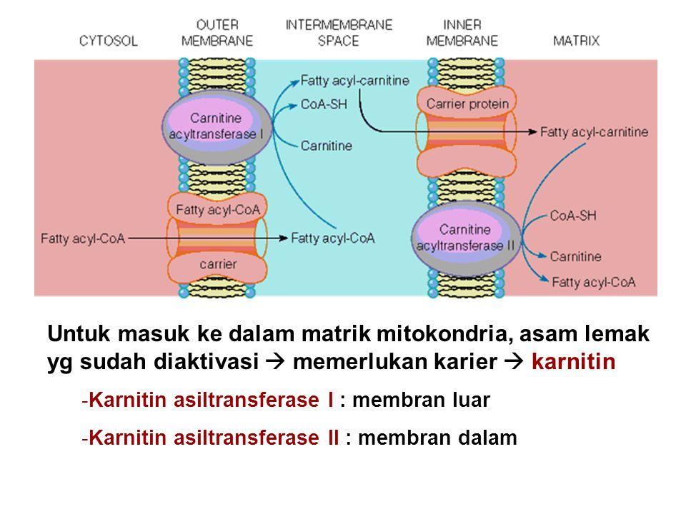 Untuk masuk ke dalam matrik mitokondria, asam lemak yg sudah diaktivasi  memerlukan karier  karnitin -Karnitin asiltransferase I : membran luar -Kar