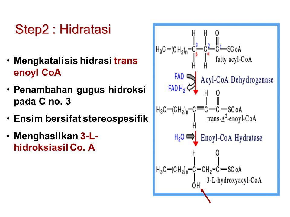 Step2 : Hidratasi Mengkatalisis hidrasi trans enoyl CoA Penambahan gugus hidroksi pada C no. 3 Ensim bersifat stereospesifik Menghasilkan 3-L- hidroks