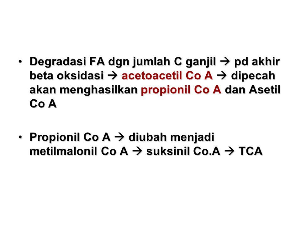 Degradasi FA dgn jumlah C ganjil  pd akhir beta oksidasi  acetoacetil Co A  dipecah akan menghasilkan propionil Co A dan Asetil Co ADegradasi FA dgn jumlah C ganjil  pd akhir beta oksidasi  acetoacetil Co A  dipecah akan menghasilkan propionil Co A dan Asetil Co A Propionil Co A  diubah menjadi metilmalonil Co A  suksinil Co.A  TCAPropionil Co A  diubah menjadi metilmalonil Co A  suksinil Co.A  TCA