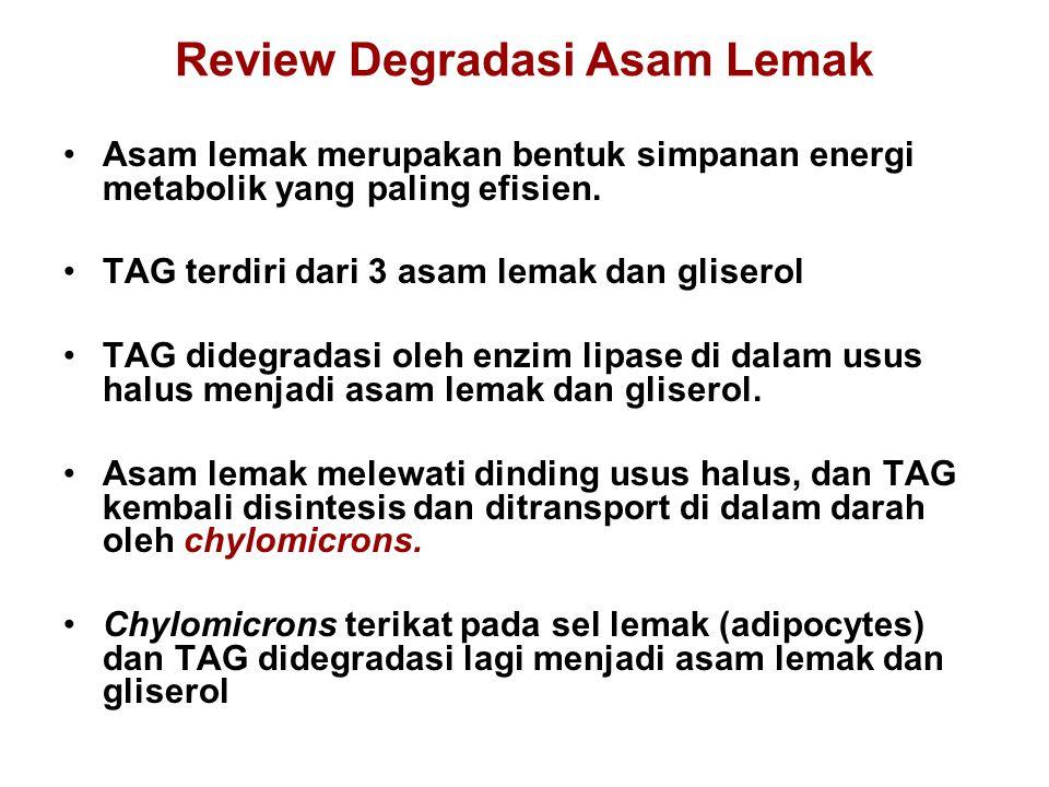 Review Degradasi Asam Lemak Asam lemak merupakan bentuk simpanan energi metabolik yang paling efisien.