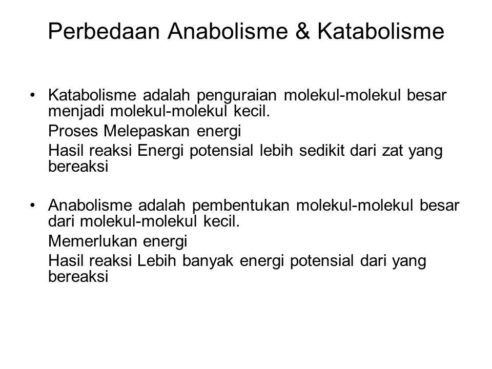 Perbedaan Anabolisme & Katabolisme Katabolisme adalah penguraian molekul-molekul besar menjadi molekul-molekul kecil. Proses Melepaskan energi Hasil r