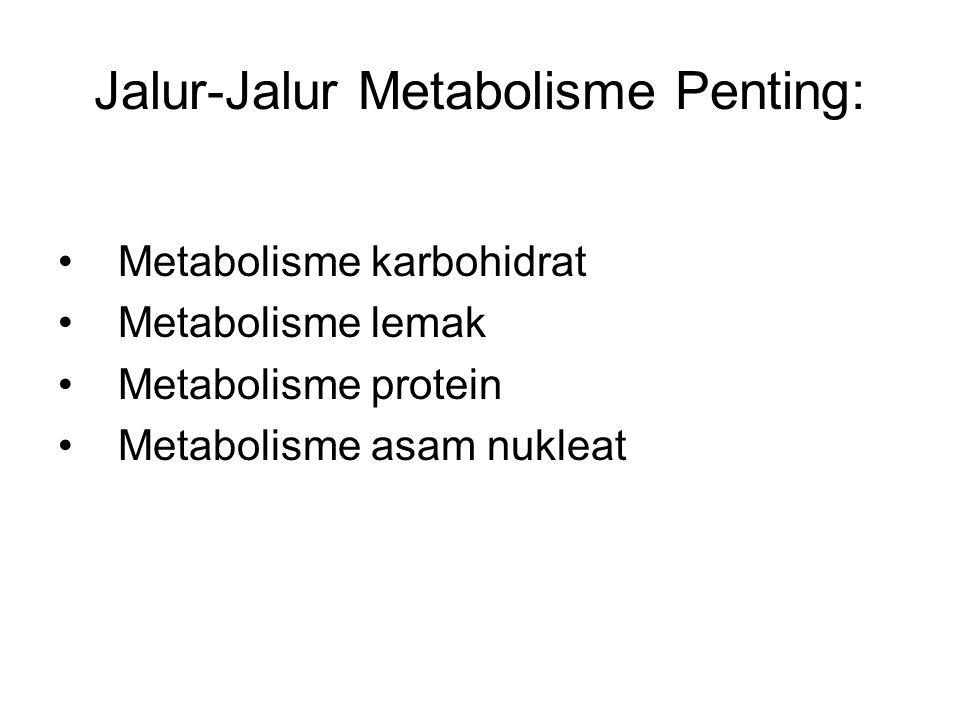 Jalur-Jalur Metabolisme Penting: Metabolisme karbohidrat Metabolisme lemak Metabolisme protein Metabolisme asam nukleat