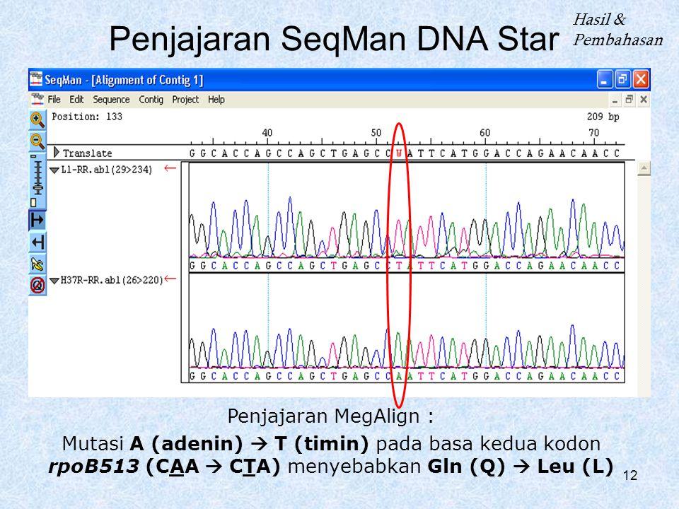 12 Penjajaran SeqMan DNA Star Hasil & Pembahasan Penjajaran MegAlign : Mutasi A (adenin)  T (timin) pada basa kedua kodon rpoB513 (CAA  CTA) menyeba