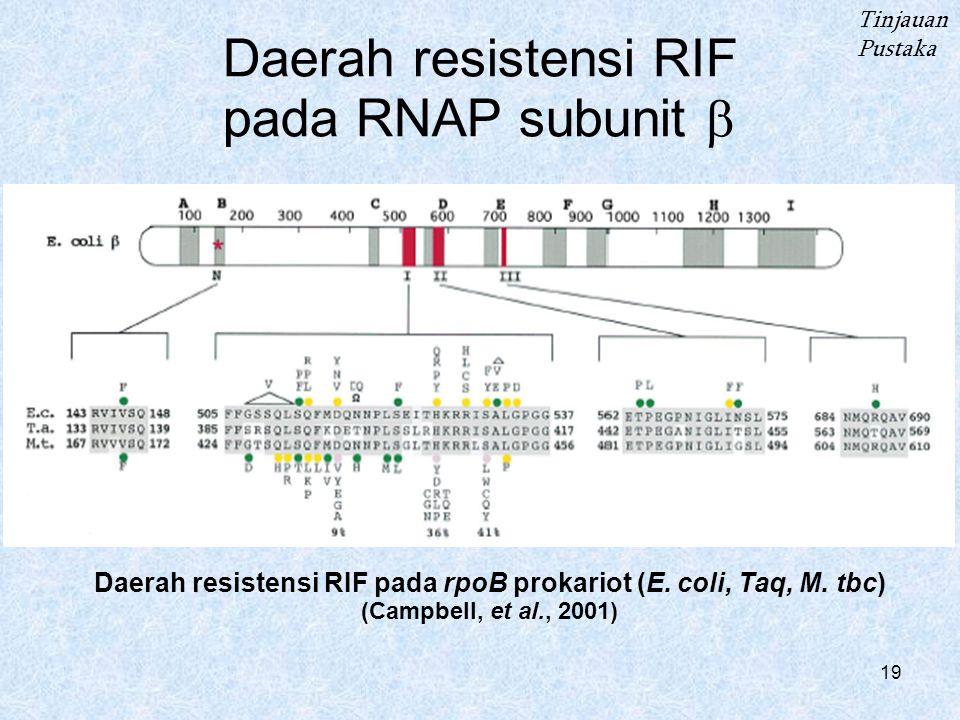 19 Daerah resistensi RIF pada RNAP subunit  Tinjauan Pustaka Daerah resistensi RIF pada rpoB prokariot (E.