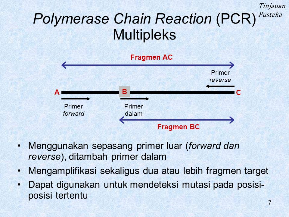7 Polymerase Chain Reaction (PCR) Multipleks Menggunakan sepasang primer luar (forward dan reverse), ditambah primer dalam Mengamplifikasi sekaligus dua atau lebih fragmen target Dapat digunakan untuk mendeteksi mutasi pada posisi- posisi tertentu Tinjauan Pustaka Fragmen AC Fragmen BC Primer forward Primer reverse Primer dalam A B C