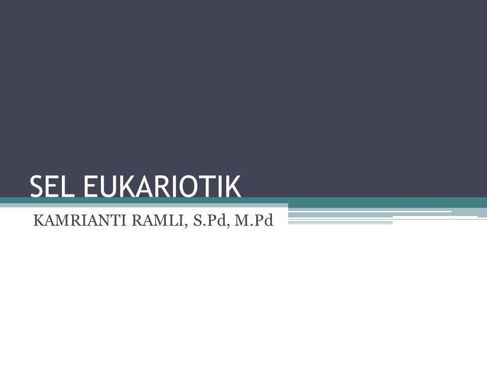 SEL EUKARIOTIK Sel eukariotik berasal dari bahasa Yunani yaitu eu yang berarti sebenarnya , dan karyon memiliki nucleus sesungguhnya yang dibungkus oleh selubung nucleus