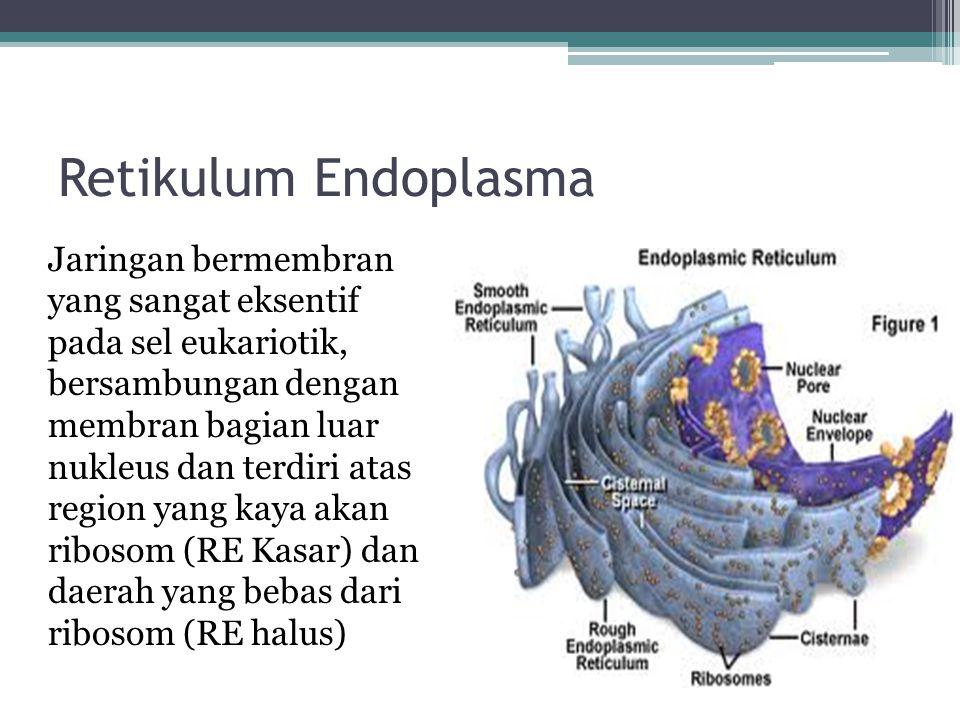 Retikulum Endoplasma Jaringan bermembran yang sangat eksentif pada sel eukariotik, bersambungan dengan membran bagian luar nukleus dan terdiri atas re