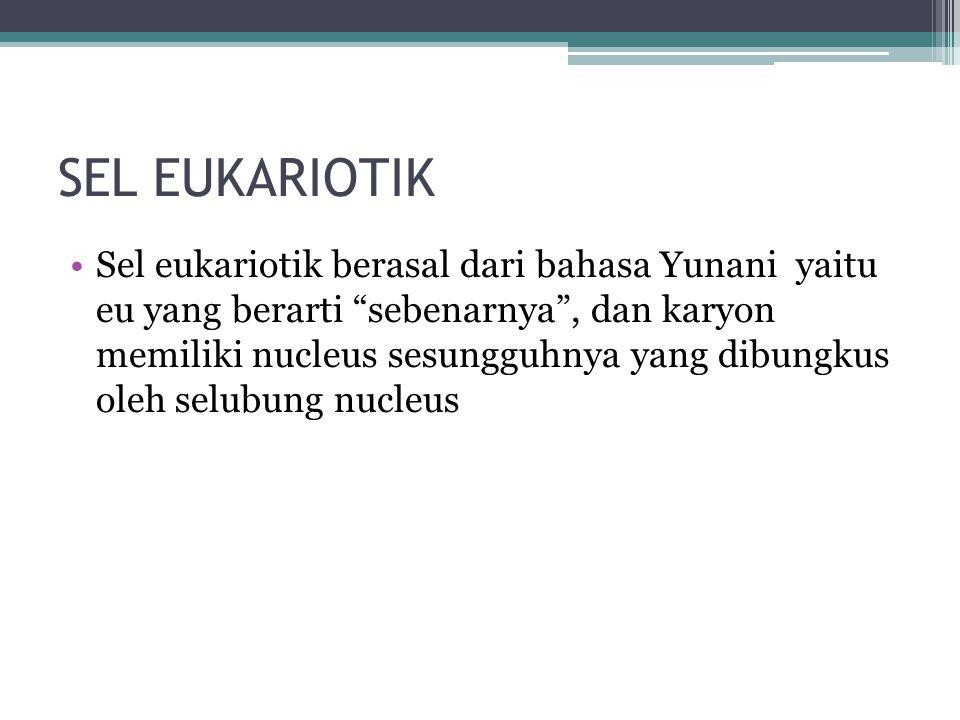 """SEL EUKARIOTIK Sel eukariotik berasal dari bahasa Yunani yaitu eu yang berarti """"sebenarnya"""", dan karyon memiliki nucleus sesungguhnya yang dibungkus o"""