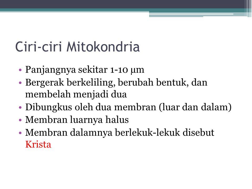 Fungsi Mitokondria Tempat metabolisme respirasi seluler