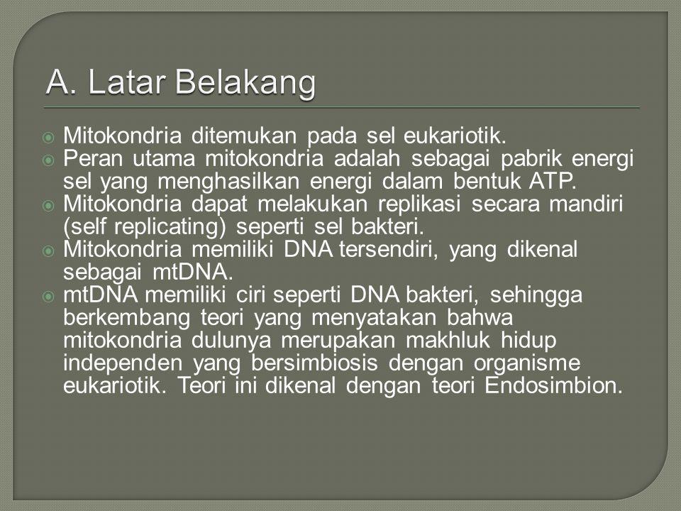  Dimanakah letak DNA di dalam mitokondria.