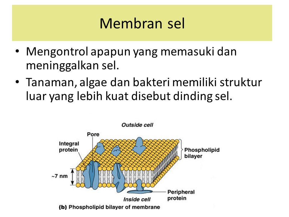 Membran sel Mengontrol apapun yang memasuki dan meninggalkan sel. Tanaman, algae dan bakteri memiliki struktur luar yang lebih kuat disebut dinding se