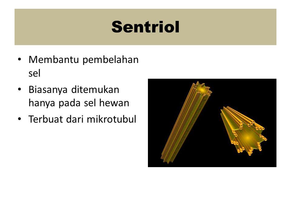 Sentriol Membantu pembelahan sel Biasanya ditemukan hanya pada sel hewan Terbuat dari mikrotubul