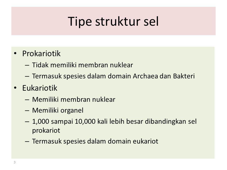 3 Tipe struktur sel Prokariotik – Tidak memiliki membran nuklear – Termasuk spesies dalam domain Archaea dan Bakteri Eukariotik – Memiliki membran nuk