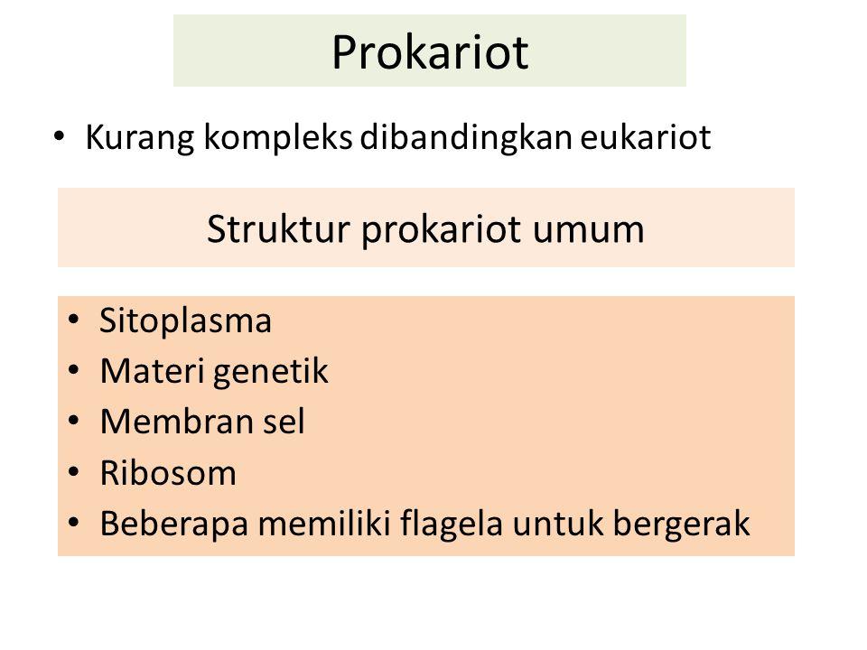 Prokariot Kurang kompleks dibandingkan eukariot Struktur prokariot umum Sitoplasma Materi genetik Membran sel Ribosom Beberapa memiliki flagela untuk