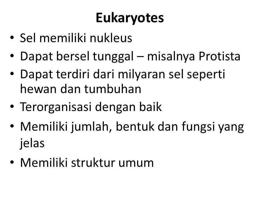 Eukaryotes Sel memiliki nukleus Dapat bersel tunggal – misalnya Protista Dapat terdiri dari milyaran sel seperti hewan dan tumbuhan Terorganisasi deng