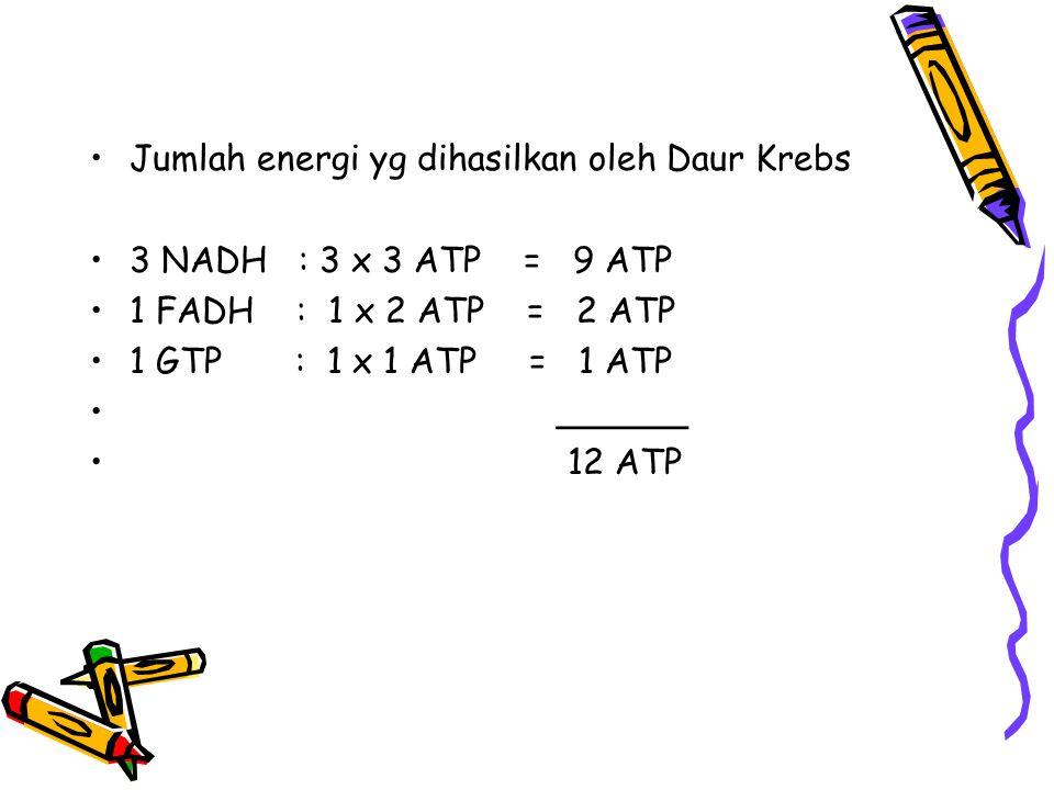 Jumlah energi yg dihasilkan oleh Daur Krebs 3 NADH : 3 x 3 ATP = 9 ATP 1 FADH : 1 x 2 ATP = 2 ATP 1 GTP : 1 x 1 ATP = 1 ATP ______ 12 ATP