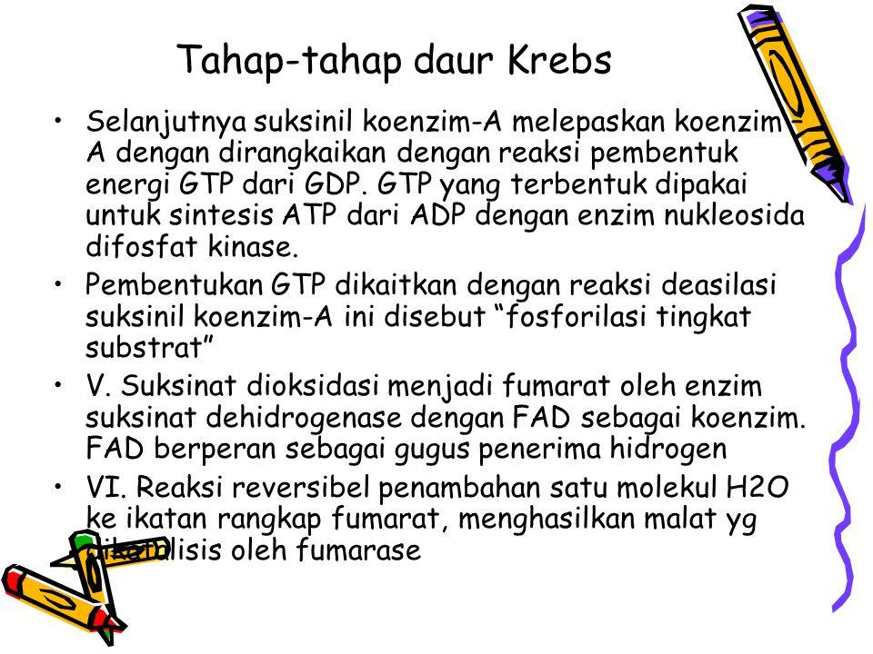 Tahap-tahap daur Krebs Selanjutnya suksinil koenzim-A melepaskan koenzim – A dengan dirangkaikan dengan reaksi pembentuk energi GTP dari GDP. GTP yang