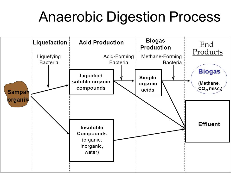 Anaerobic Digestion Process Liquefaction Liquefying Bacteria Acid Production Liquefied soluble organic compounds Insoluble Compounds (organic, inorgan