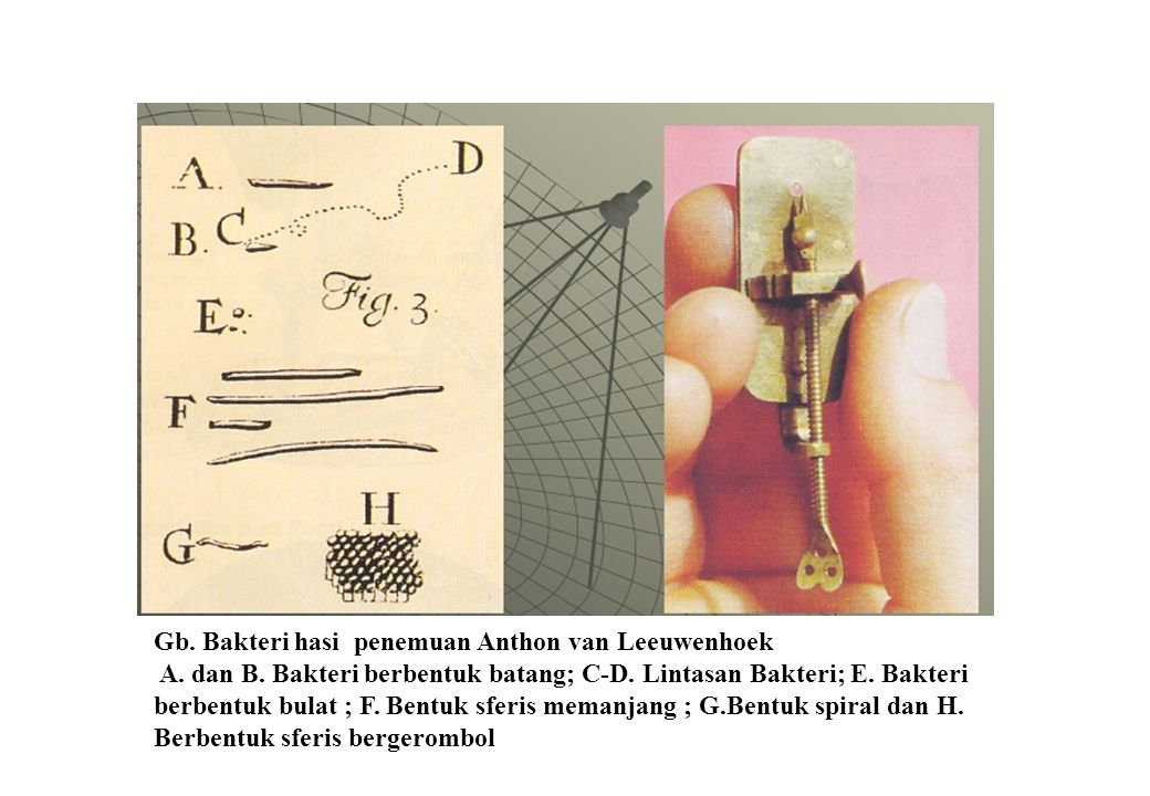 Gb. Bakteri hasi penemuan Anthon van Leeuwenhoek A.