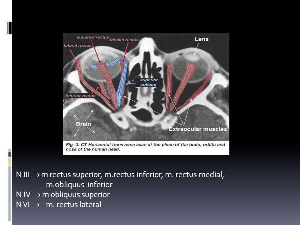 GERAK BOLA MATA N III → m rectus superior, m.rectus inferior, m. rectus medial, m.obliquus inferior N IV → m obliquus superior N VI → m. rectus latera