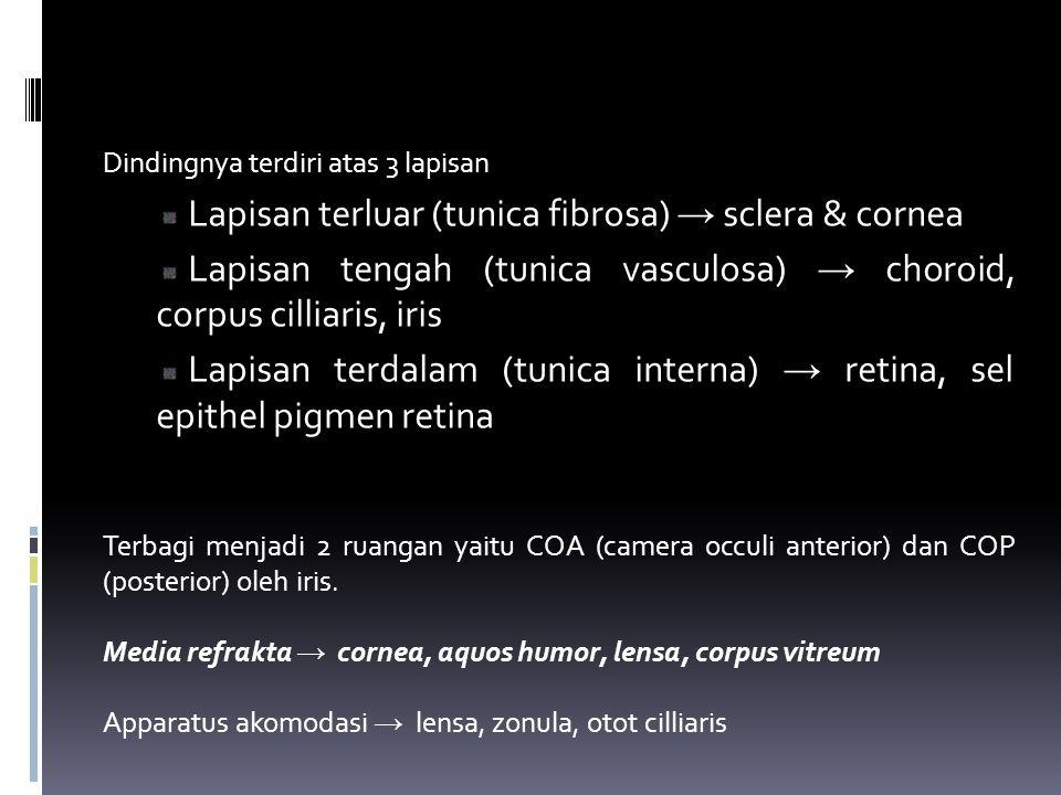Dindingnya terdiri atas 3 lapisan Lapisan terluar (tunica fibrosa) → sclera & cornea Lapisan tengah (tunica vasculosa) → choroid, corpus cilliaris, ir
