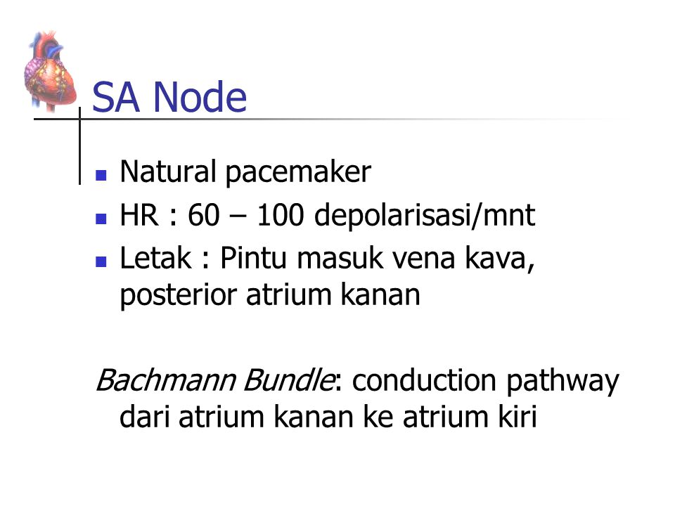SA Node Natural pacemaker HR : 60 – 100 depolarisasi/mnt Letak : Pintu masuk vena kava, posterior atrium kanan Bachmann Bundle: conduction pathway dar