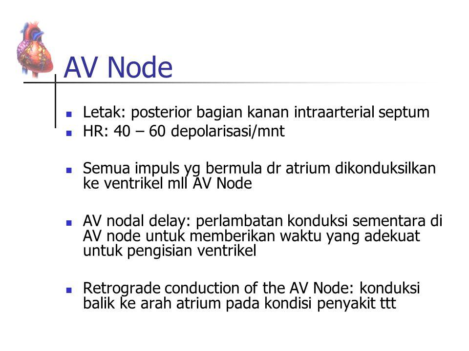 AV Node Letak: posterior bagian kanan intraarterial septum HR: 40 – 60 depolarisasi/mnt Semua impuls yg bermula dr atrium dikonduksilkan ke ventrikel