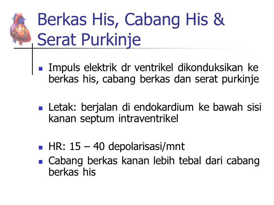 Berkas His, Cabang His & Serat Purkinje Impuls elektrik dr ventrikel dikonduksikan ke berkas his, cabang berkas dan serat purkinje Letak: berjalan di