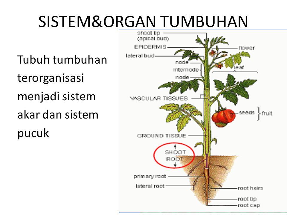 SISTEM&ORGAN TUMBUHAN Tubuh tumbuhan terorganisasi menjadi sistem akar dan sistem pucuk