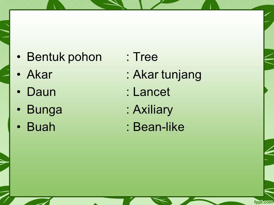 Bentuk pohon: Tree Akar: Akar tunjang Daun: Lancet Bunga: Axiliary Buah: Bean-like