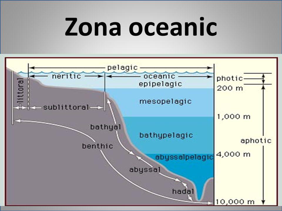 Zona oceanic