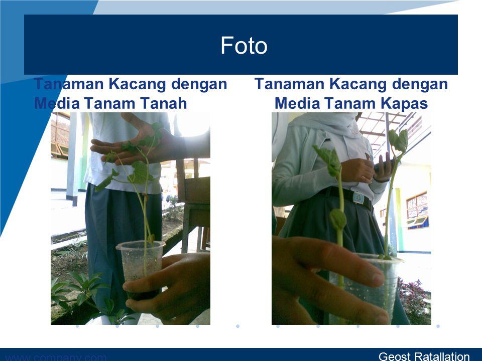 www.company.com Foto Tanaman Kacang dengan Media Tanam Tanah Tanaman Kacang dengan Media Tanam Kapas Geost Ratallation