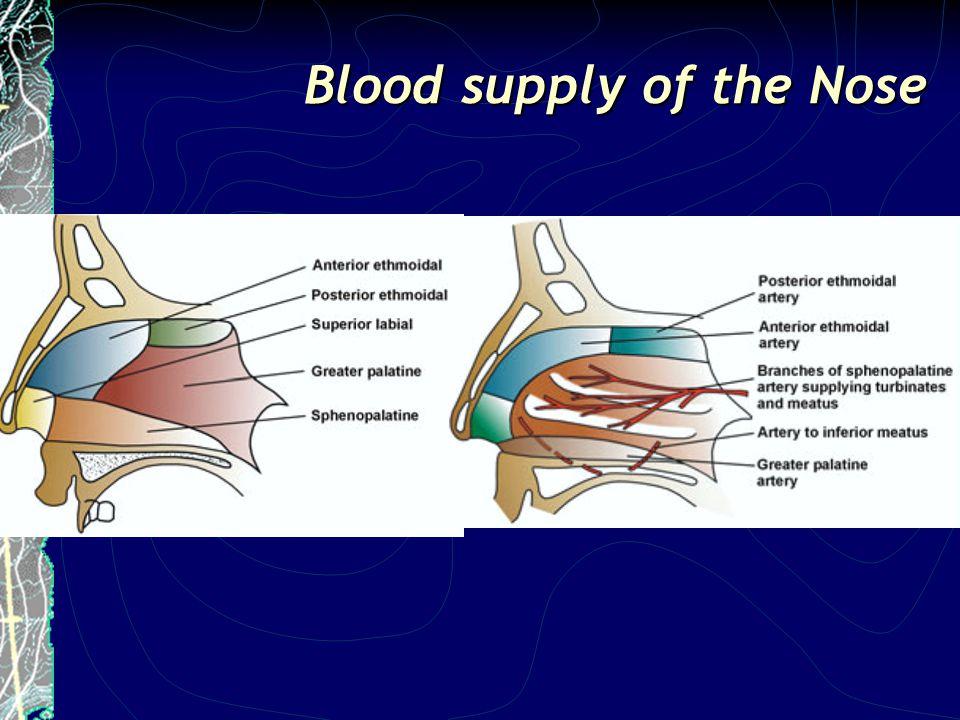 Sesuai dengan ETIOLOGI Mencegah REKURENSI Krim AB Kontrol hipertensi Rujukan dini ke Hematologi Terapi bedah spesifik: SMR / septoplasti, dermoplasti, ekstirpasi tumor