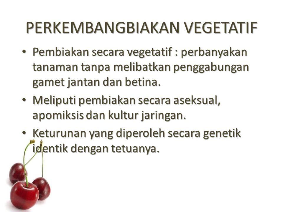PERKEMBANGBIAKAN VEGETATIF Pembiakan secara vegetatif : perbanyakan tanaman tanpa melibatkan penggabungan gamet jantan dan betina.
