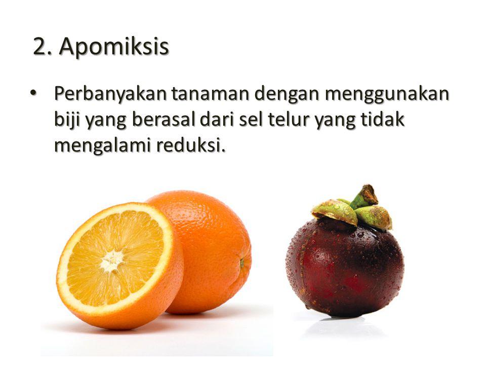 2. Apomiksis Perbanyakan tanaman dengan menggunakan biji yang berasal dari sel telur yang tidak mengalami reduksi. Perbanyakan tanaman dengan mengguna