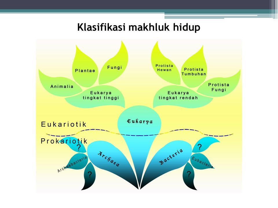 Tingkat taksonomi (Domain): Kingdom: Filum/Divisi: Kelas: Ordo: Famili: Genus: Spesies: