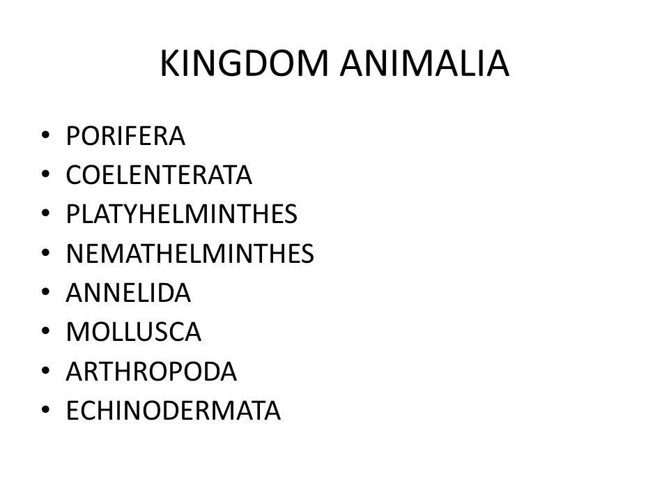 DASAR KLASIFIKASI KINGDOM ANIMALIA Simetri tubuh Lapisan embrio Alat dan sistem pencernaan Reproduksi Sistem transportasi Sistem pernafasan