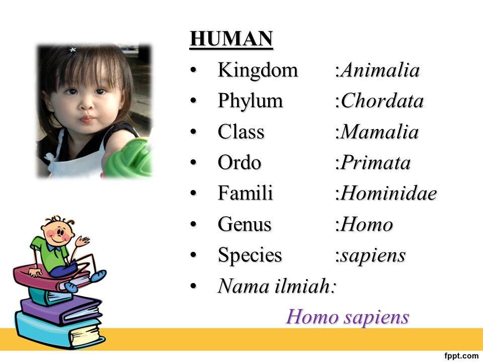 HUMAN Kingdom :AnimaliaKingdom :Animalia Phylum :ChordataPhylum :Chordata Class :MamaliaClass :Mamalia Ordo :PrimataOrdo :Primata Famili :HominidaeFam