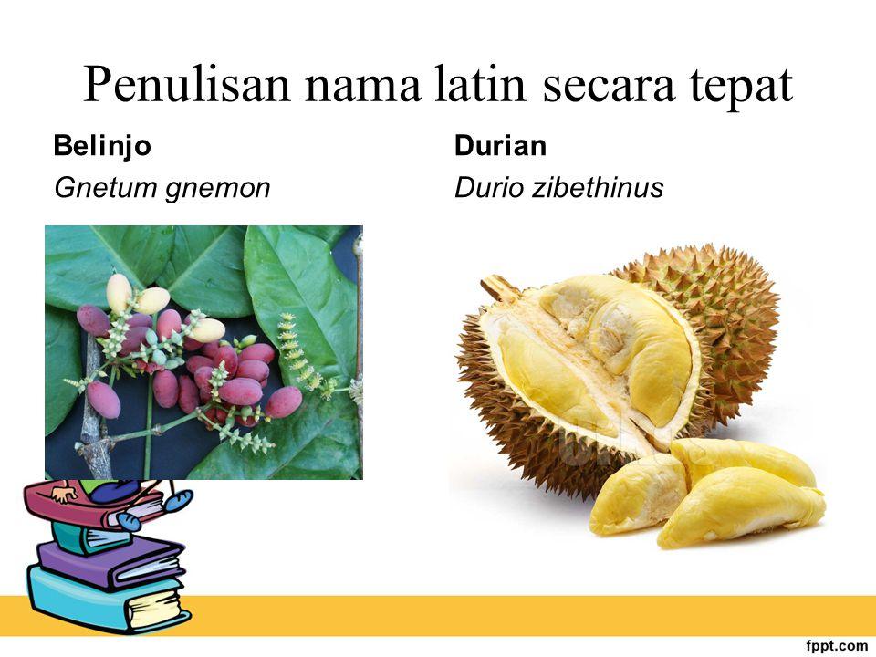 Penulisan nama latin secara tepat Belinjo Gnetum gnemon Durian Durio zibethinus